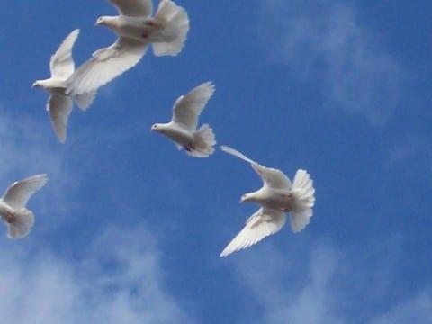 Reincarnation, Karma and Dharma