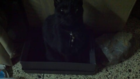 Cat Inna Box